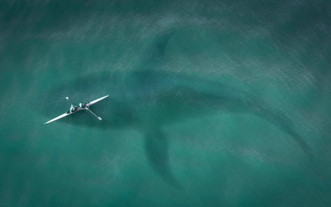 Bitcoin Wale manipulieren den Markt – Auf was Du jetzt achten solltest!